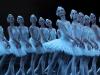 l-le-lac-des-cygnes_corps-de-ballet