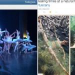 Ballet & Tweet – S14-15 EP26