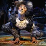 Cats d'Andrew Lloyd Webber – Théâtre Mogador