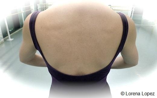 Le dos est plat, les omoplates sont plaquées