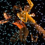 Pixel de Mourad Merzouki clôt en féérie Suresnes cités danse