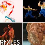 Agenda danse – Mars 2019